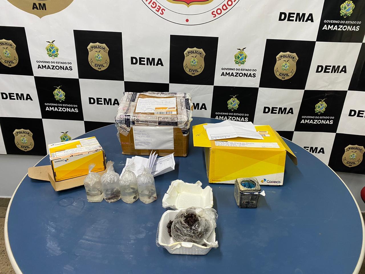 Polícia instaura inquérito para identificar autores de tráfico de animais silvestres encontrados vivos em caixas de encomendas dos Correios