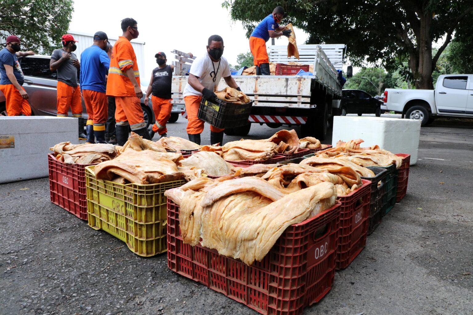 Prefeitura de Manaus doa três toneladas de pirarucu a entidades de assistência social