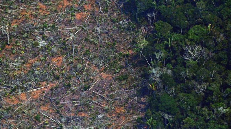 """Site investigativo francês mergulha """"no reino do agronegócio"""" brasileiro na Amazônia"""