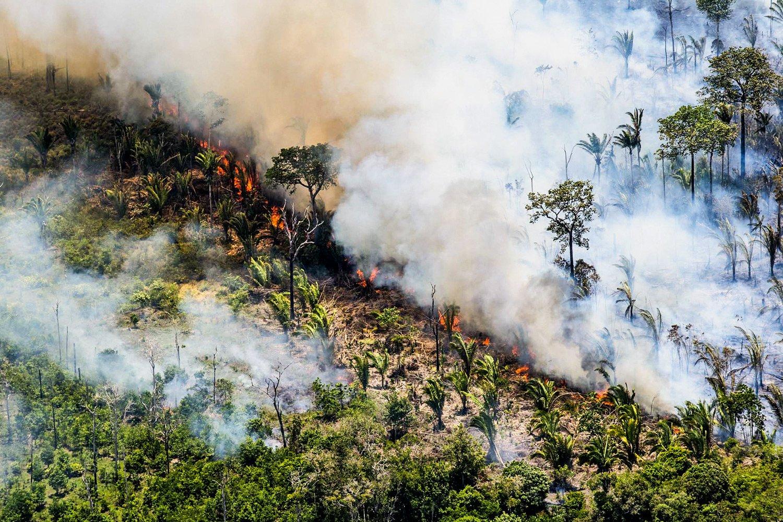 Seca e incêndios causaram morte de 3 bilhões de plantas entre 2015 e 2018, diz estudo