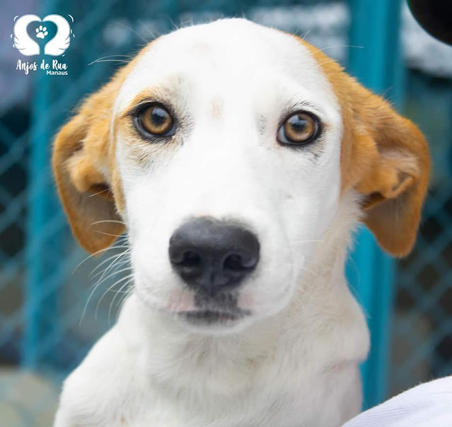 """ONG realiza """"Um  dia  bom pra cachorro"""" neste domingo (25)"""