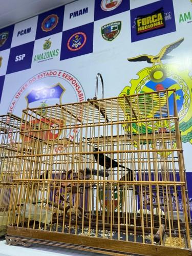 Pássaros silvestres avaliados em R$ 60 mil são apreendidos em embarcação com destino a Manaus
