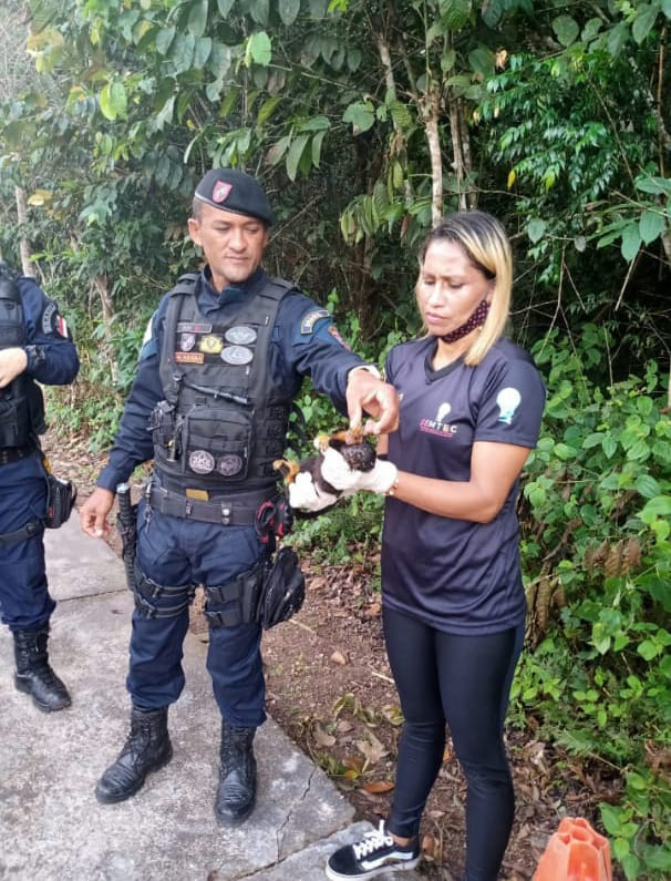 Fiscais de Meio Ambiente de Presidente Figueiredo resgatam animal silvestre debilitado