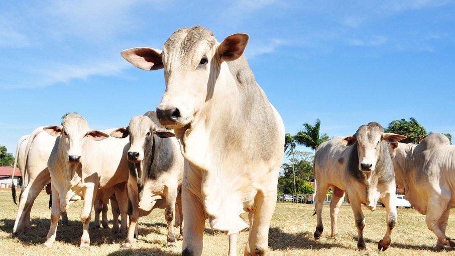 Vaca louca: órgão internacional conclui que risco no Brasil é insignificante