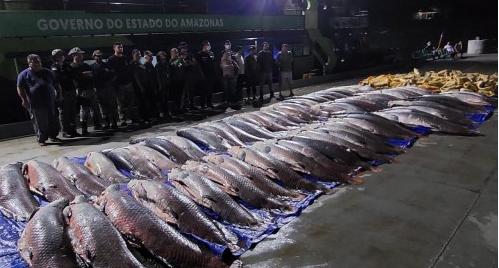 Doze toneladas de pescado ilegal são apreendidas em Coari